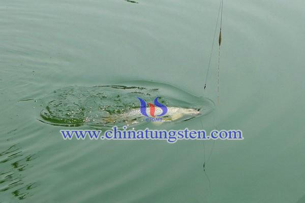 釣魚切線跑魚圖片