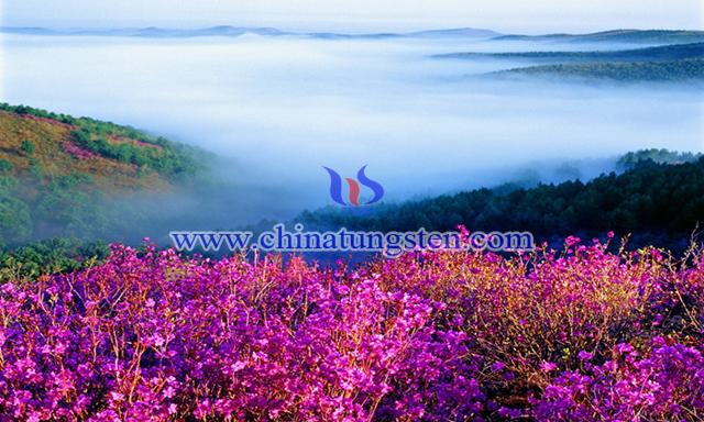 雙鴨山圖片